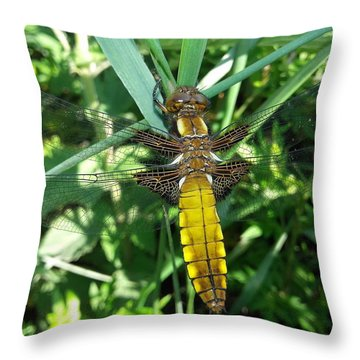 An Instant, A Beating Of Wings Throw Pillow