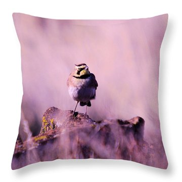 An Searching Gaze  Throw Pillow by Jeff Swan