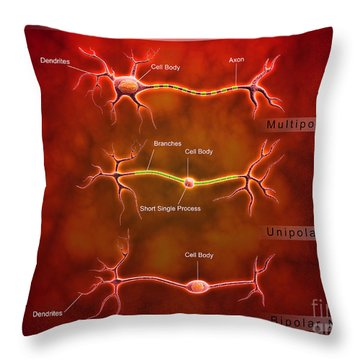 Anatomy Structure Of Neurons Throw Pillow by Stocktrek Images