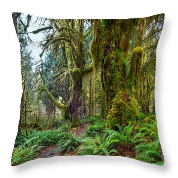 Ancient Forest Panorama Throw Pillow