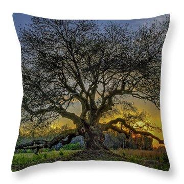 Ancient Live Oak Tree Throw Pillow