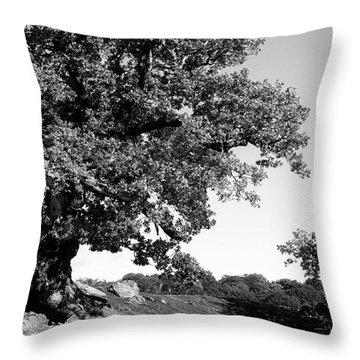 Ancient Oak, Bradgate Park Throw Pillow