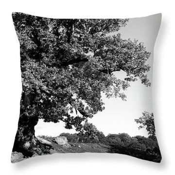 Ancient Oak, Bradgate Park Throw Pillow by John Edwards
