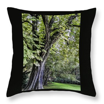 Ancient Tree Luxembourg Gardens Paris Throw Pillow