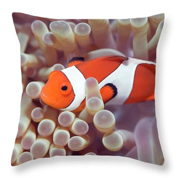 Anemone And Clown-fish Throw Pillow by MotHaiBaPhoto Prints