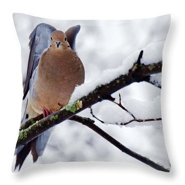 Throw Pillow featuring the photograph Angel Mourning Dove by Angel Cher