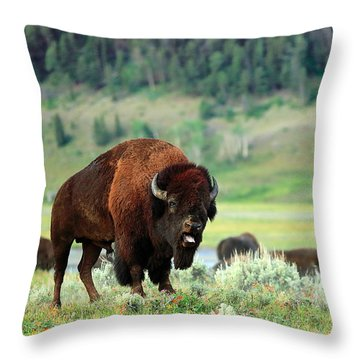Angry Buffalo Throw Pillow by Todd Klassy