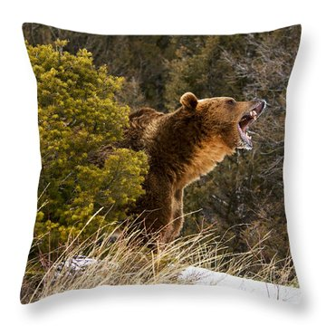 Angry Grizzly Behind Tree Throw Pillow