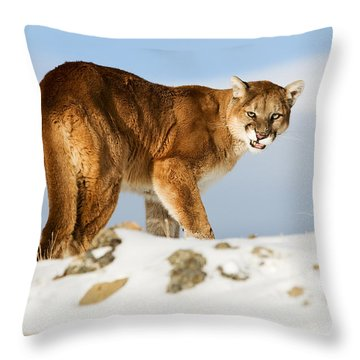Angry Mountain Lion Throw Pillow