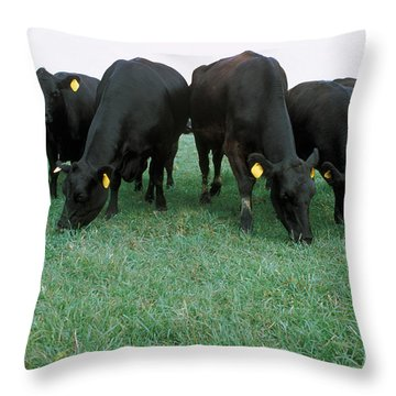 Angus Cattle Throw Pillow by Science Source