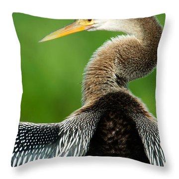 Anhinga Anhinga Anhinga, Pantanal Throw Pillow by Panoramic Images