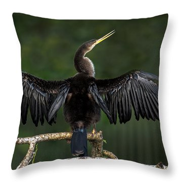 Anhinga Throw Pillows