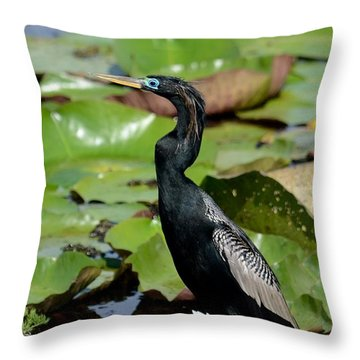 Anhinga In May  Throw Pillow by Kathy Gibbons