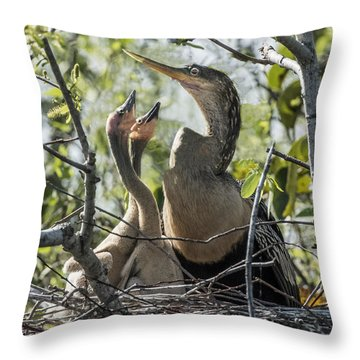 Anhinga In Nest With Her Chicks Throw Pillow