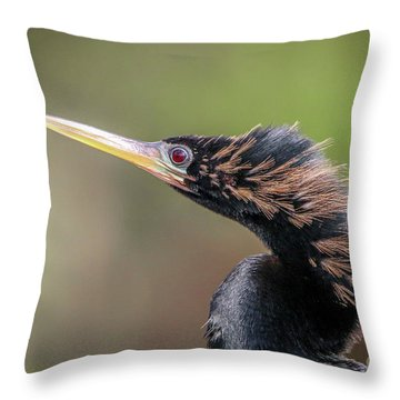Anhinga Portrait Throw Pillow