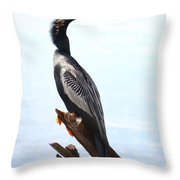 Anhinga's Pose  Throw Pillow