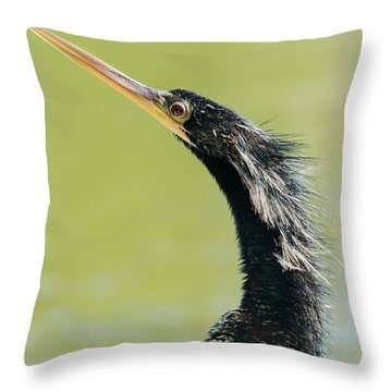 Throw Pillow featuring the photograph Anhingha Bird In Key West by Bob Slitzan