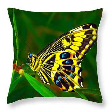 Anise Swallowtail Butterfly Throw Pillow