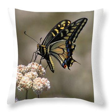 Anise Swallowtail Throw Pillow