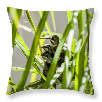 Anna Hummer On Nest Throw Pillow by Daniel Hebard
