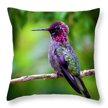 Anna Humming Bird Throw Pillow