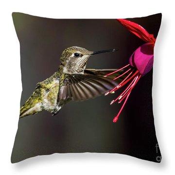 Anna Juvenile Hummingbird Throw Pillow