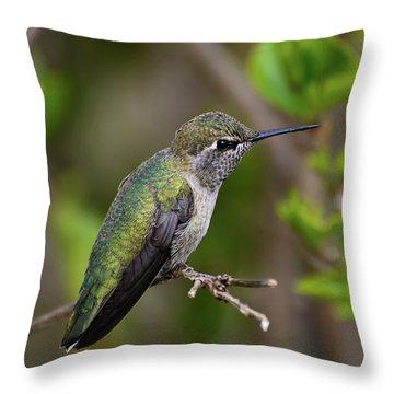 Anna's Hummingbird On Lime Tree Throw Pillow