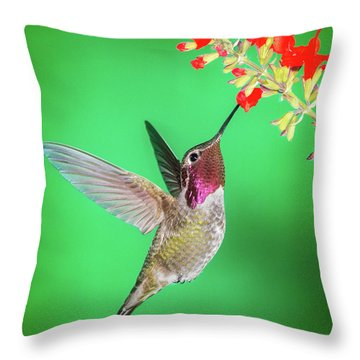 Anna's Treat Throw Pillow