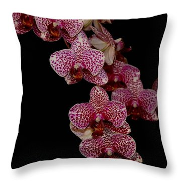 Anniversary Orchid Plant On Black Throw Pillow