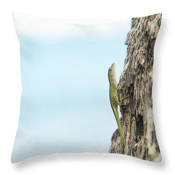 Anole Lizard Throw Pillow by Brandon Tabiolo - Printscapes