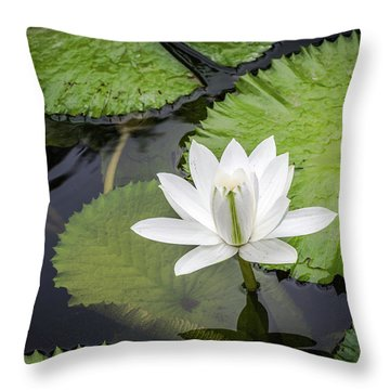 Another Lily Throw Pillow