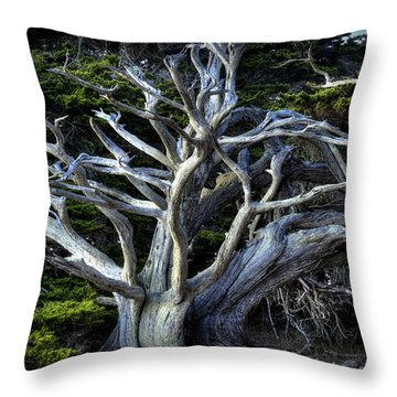 Ansel's Cypress Throw Pillow