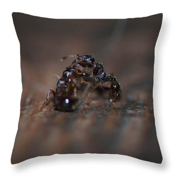 Ant Fight Throw Pillow