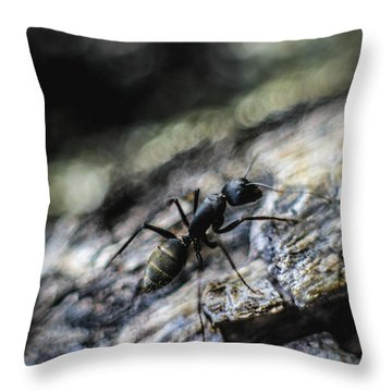 Dynamic Throw Pillow