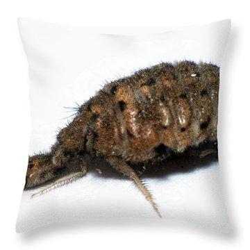 Ant Lion Throw Pillow