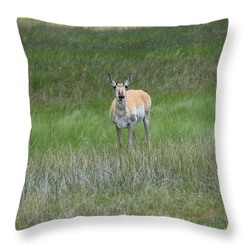 Prong Horned Antelope Lake John Swa Co Throw Pillow