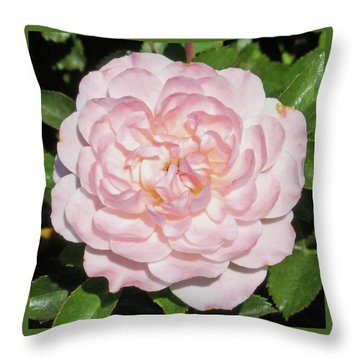 Antique Pink Rose Throw Pillow