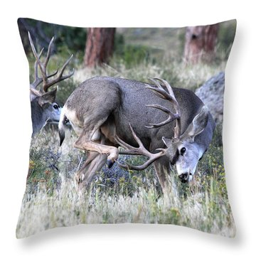 Throw Pillow featuring the photograph Antler Scratch by Shane Bechler