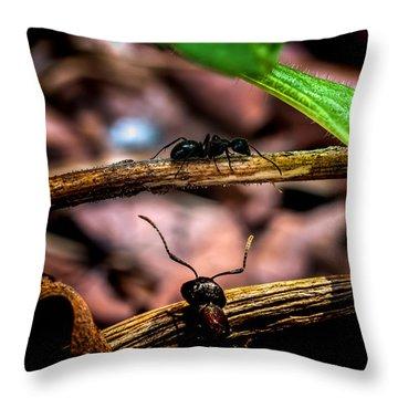 Ants Adventure Throw Pillow by Bob Orsillo