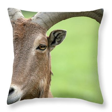Aoudad Throw Pillow by Karol Livote