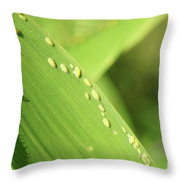 Aphid Family Throw Pillow