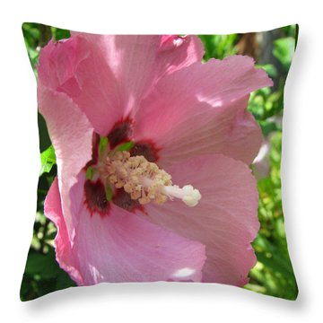 Aphrodite Rose Of Sharon Hibiscus 1 Throw Pillow by Brooks Garten Hauschild