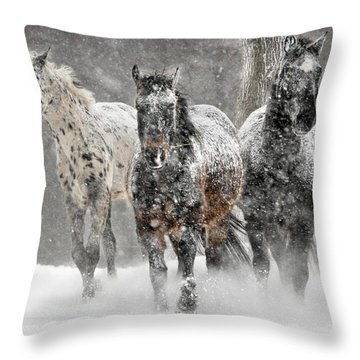 Appaloosa Winter Throw Pillow by Wade Aiken