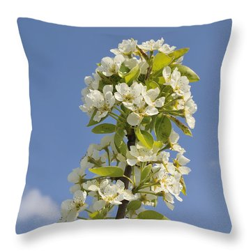 Apple Blossom In Spring Throw Pillow