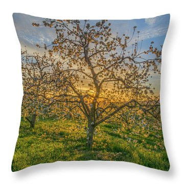 Apple Blossoms At Sunrise 2 Throw Pillow
