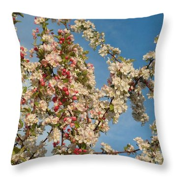 Apple Blossoms Throw Pillow by Karen Molenaar Terrell