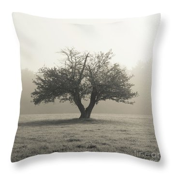 Throw Pillow featuring the photograph Apple Tree In The Mist by Edward Fielding