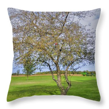 Apple Tree Throw Pillow by Kathleen Struckle