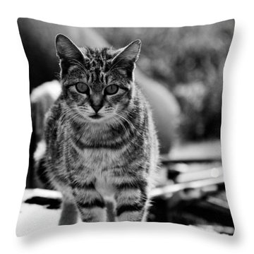 Throw Pillow featuring the photograph Approaching  by Chriss Pagani