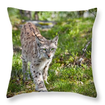 Approaching Lynx Throw Pillow